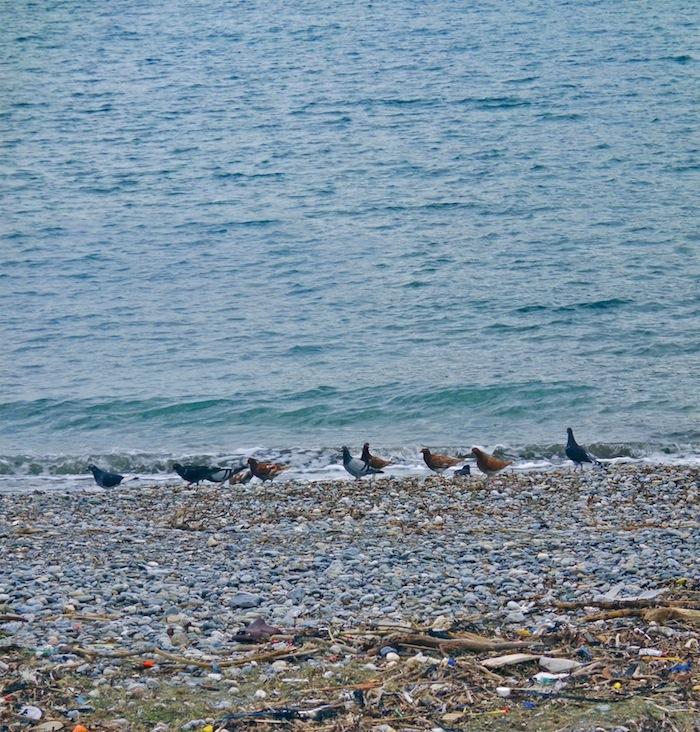 pigeons-beach
